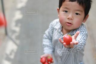 春,プレゼント,いちご,苺,男の子