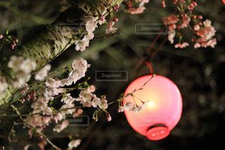 春の写真・画像素材[415187]