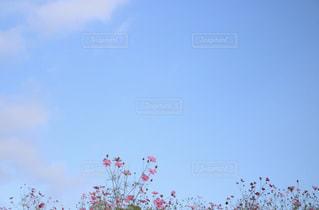 近くの木のアップの写真・画像素材[1459921]