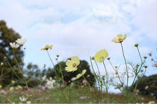 近くの花のアップの写真・画像素材[1459970]