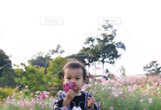 公園,花,秋,花畑,コスモス,男の子