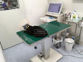 猫,医療,検査,治療,動物病院,診療,診療ベッド