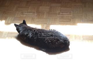 猫,リラックス,のんびり,ひなたぼっこ