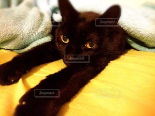 猫,リラックス,のんびり,ブランケット