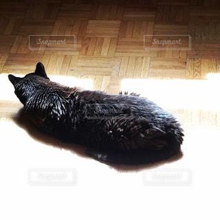 猫,黒,昼寝,日差し,暖かい,のんびり,まったり,ひなたぼっこ,フローリング,ゆったり,時,動かない