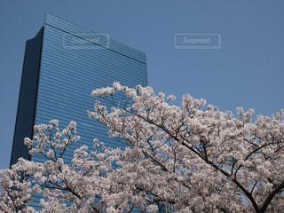 春,桜,屋外,ピンク,観光,大阪城公園,大阪府,クリスタルタワー
