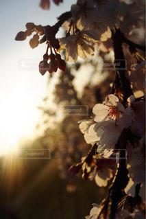 自然の写真・画像素材[385709]