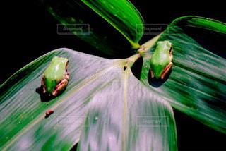 緑の写真・画像素材[462675]