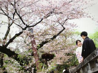 花 - No.401836