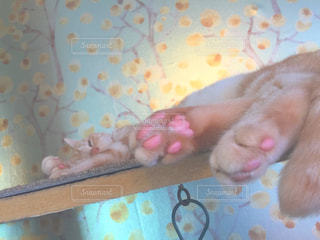 ベッドの上で横になっている猫の写真・画像素材[772545]