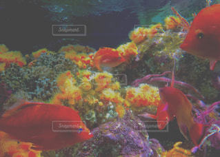 水の中の魚の群れの写真・画像素材[772595]