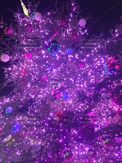 ステージで紫の花の写真・画像素材[930730]