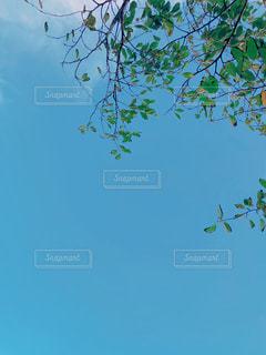 空を飛んでいる鳥の写真・画像素材[1553600]