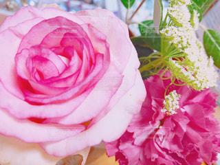 近くの花のアップの写真・画像素材[1564902]