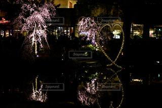 花,春,桜,夜景,池,ライト,ハート,庭園,ライトアップ