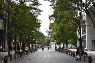 風景,東京,並木道,ショッピング,丸の内,丸の内仲通り