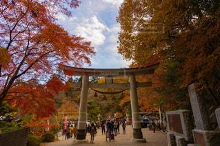 秋の神社 - No.882766