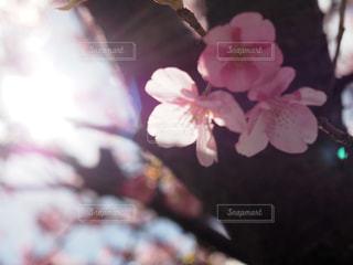 春 - No.404570