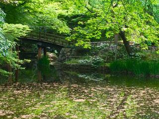 橋の写真・画像素材[465229]