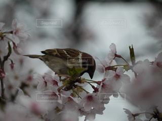 近くの花のアップ - No.725650