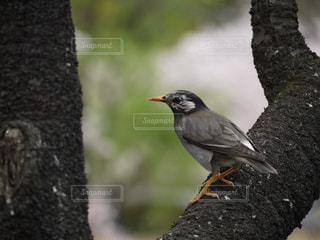 岩の上に座っている鳥 - No.725658