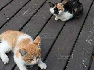 ベンチに座ってオレンジと白猫 - No.732689