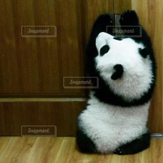 黒と白の犬の写真・画像素材[732692]