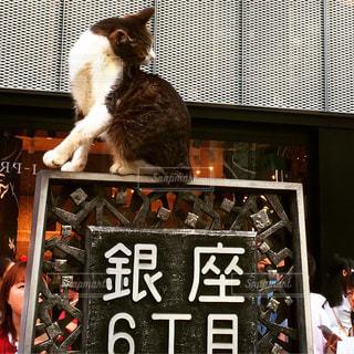 窓の前に座っている猫 - No.732771