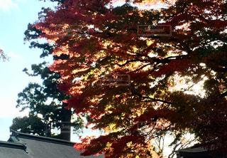 近くの木のアップの写真・画像素材[883147]