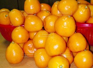 フルーツ,果実,金柑,キンカン,自宅の庭