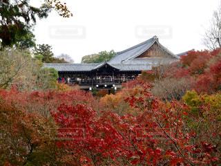 紅葉,京都,観光,東福寺,通天橋,臥雲橋