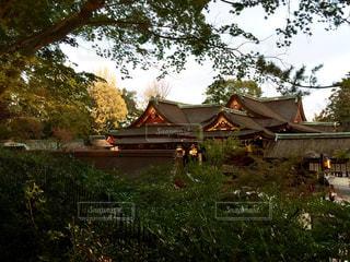 紅葉,京都,神社,電車,観光,北野天満宮
