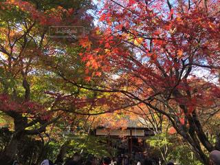 紅葉,京都,観光,寺,常寂光院