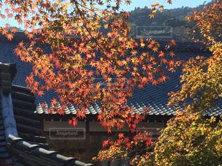 紅葉,京都,観光,寺,天龍寺