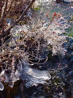 九寨溝内のせせらぎ、樹々など一部氷結の写真・画像素材[922120]