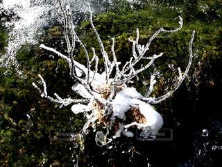 九寨溝内のせせらぎ、樹々など一部氷結の写真・画像素材[922122]
