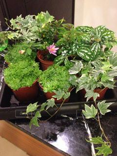 近くの植物のアップの写真・画像素材[964709]