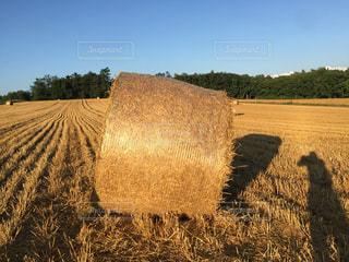 牧草と長い影の写真・画像素材[966314]