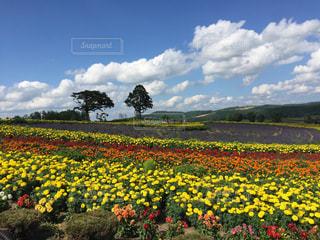 色とりどりの花のラインの写真・画像素材[1032958]
