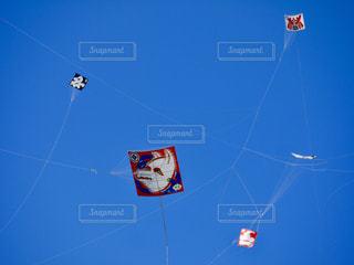 大空に大凧乱舞の写真・画像素材[1097877]