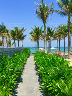 ヤシの木とビーチの写真・画像素材[1109281]