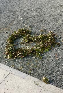 落ち葉,ハート,熱海,静岡,境内,来宮神社,恋愛成就