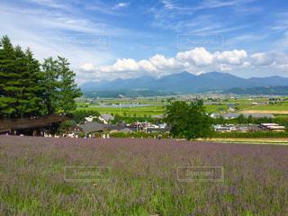 ラベンダー畑からの写真・画像素材[1113557]