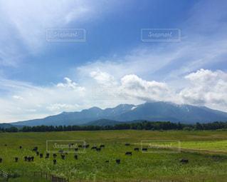 森のガーデン、緑豊かな緑の草原に放牧牛の群れの写真・画像素材[1113589]