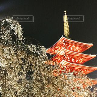 夜桜と五重の塔のライトアップの写真・画像素材[1140539]