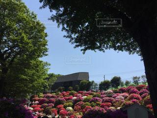 近くのフラワー ガーデンの写真・画像素材[1143359]