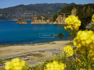 西伊豆黄金崎と菜の花の写真・画像素材[1147785]