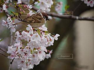近くの花のアップの写真・画像素材[1147874]