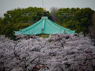 背景の木と大規模なグリーン フィールドの写真・画像素材[1147875]