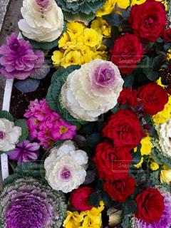 近くの花のアップの写真・画像素材[1148021]
